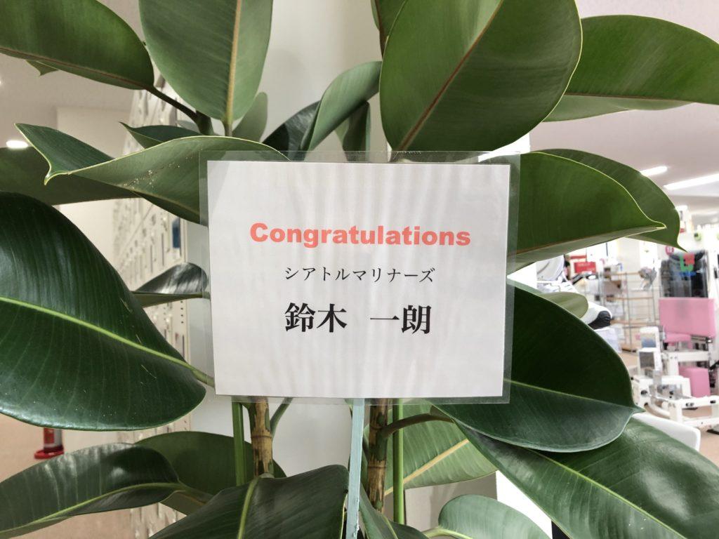 イチロー殿 寄贈の観葉植物